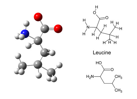Structural model of leucine molecule on white background, 3d illustration illustration