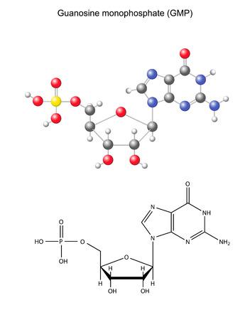 monomer: F�rmula qu�mica estructural y el modelo del monofosfato de guanosina componente ARN, ilustraci�n 2D y 3D, aislado en fondo blanco