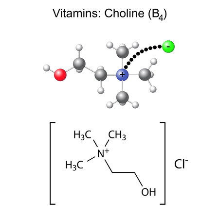 Structural chemical formula and model of vitamin choline - b4, 3d and 2d illustration, isolated on white Illustration