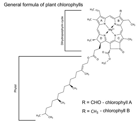 synthesis: General structural chemical formula of plant chlorophyll molecules, 2d illustration, isolated on white background