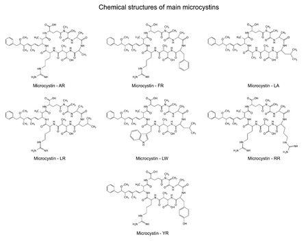 Chemical structural formulas of main microcystins - cyanotoxins, 2d illustration, skeletal style, isolated on white background