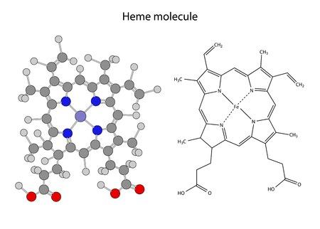 Structural chemical formula of heme molecule, 2d illustration