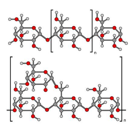 澱粉の構造の化学成分  イラスト・ベクター素材