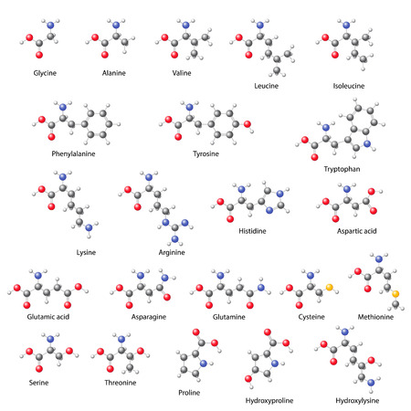Amino acids -  main structural chemical formulas, 3d illustration on white background, balls & sticks style, vector, eps 8