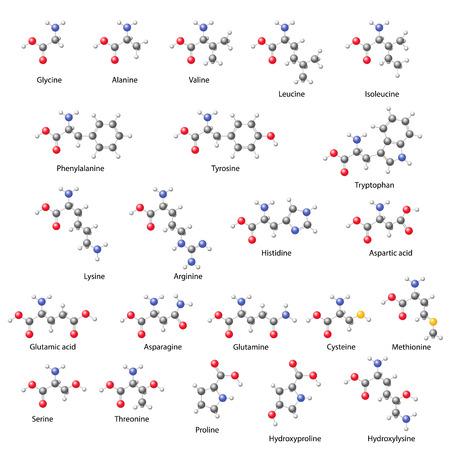 Aminozuren - belangrijkste structurele chemische formules, 3D-afbeelding op een witte achtergrond, ballen en stokken stijl, vector, eps 8 Stockfoto - 32782395