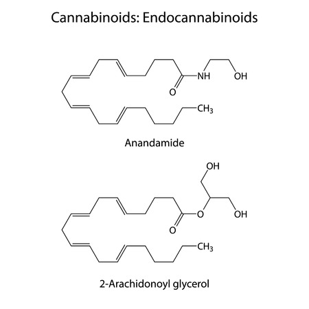 Endocannabinoids - signaling molecules of humans and animals, structural chemical skeletal formulas, 2d vector, eps 8