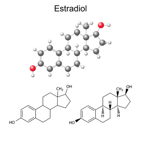 Structural chemical formulas and model of estradiol molecule, 2D & 3D Illustration,  isolated on white background, vector, eps8 Illustration
