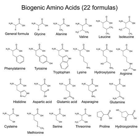 Twenty two biogenic amino acids - chemical formulas Vector