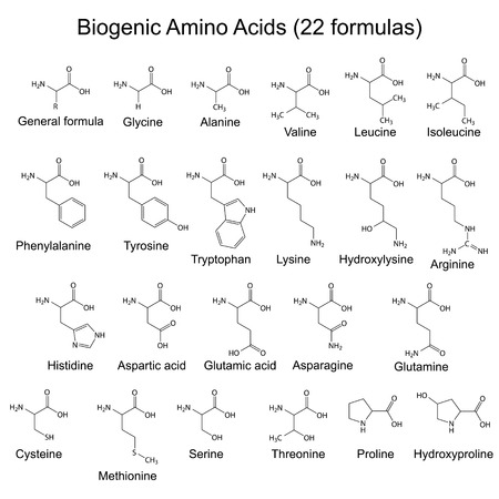 Twenty two biogenic amino acids - chemical formulas