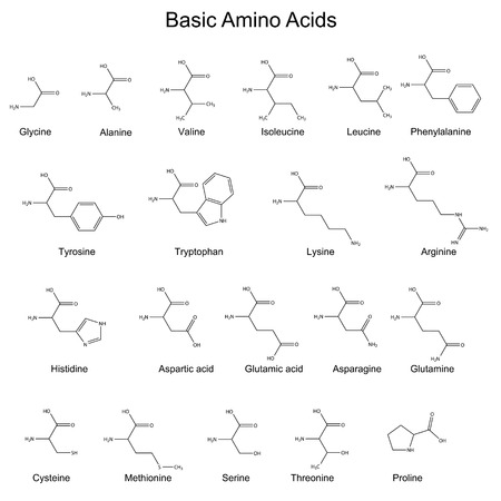 Skeletal structures of basic amino acids, 2d, vector 일러스트