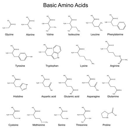 Skeletal structures of basic amino acids, 2d, vector Stock Illustratie