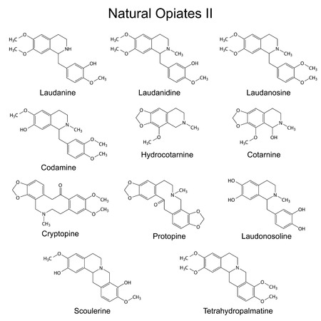 opioid: Chemical formulas of main natural opiates - second set, 2d illustration, isolated, vector.