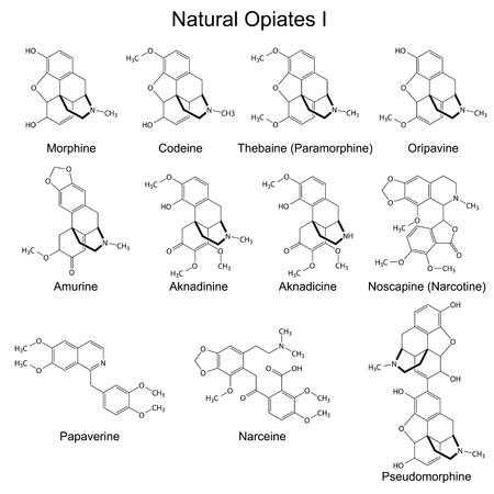 opium: Structural formulas of main natural opiates - first set, 2d illustration, isolated, vector, eps 8