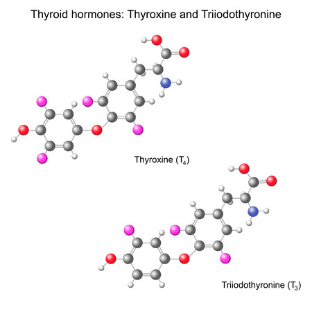 structural: Structural chemical model of  thyroid hormones, 3d illustration, isolated, vector, eps 8