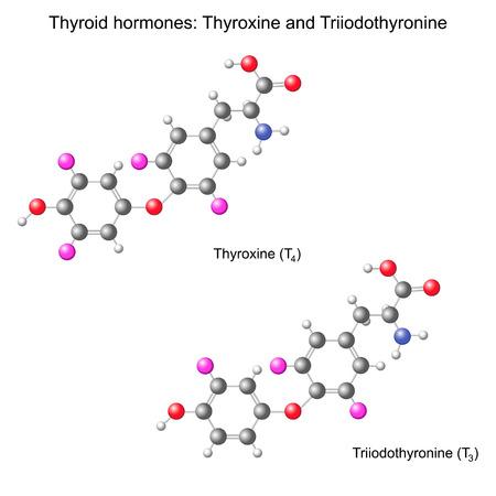 hormonen: Structurele chemische model van schildklierhormonen, 3d illustratie, geïsoleerd, vector, eps 8 Stock Illustratie