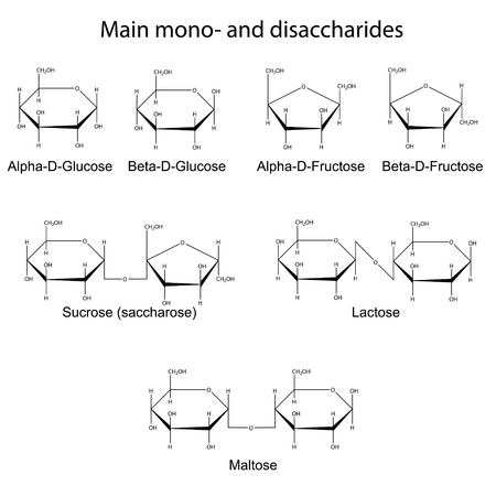 Structural formulas of main cyclic monosaccharides and disaccharides, 2d illustration, vector, eps 8