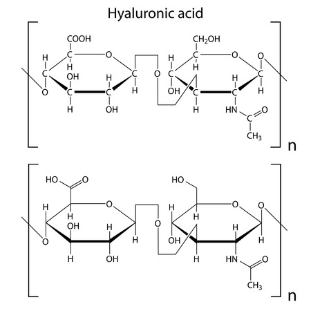 extracellular: Chemical formula of hyaluronic acid, molecular structure, 2d isolated vector, eps 8