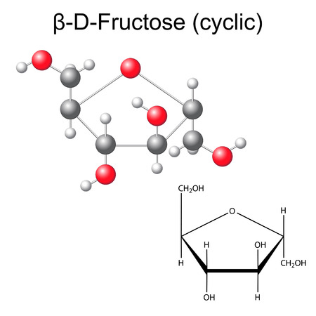 acyclic: Structural chemical formula and model of fructose - beta-D-fructose, 2D and 3D illustration, vector, isolated on white background,