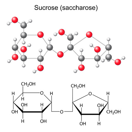 Structural chemical formula and model of sucrose - saccharose, 2d and 3D illustration, isolated  vector