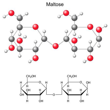 構造化学式とマルトース、2 d、3 d イラスト、ベクトルは、白い背景で隔離のモデル