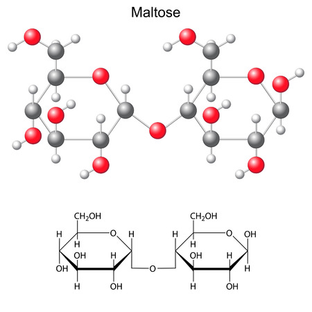 Structural chemical formula and model of maltose, 2d and 3d illustration, vector, isolated on white background