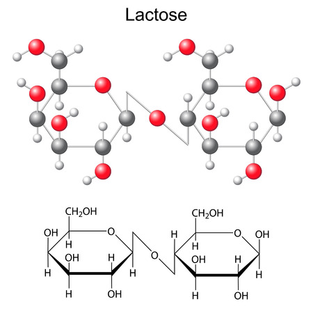 Structural chemical formula and model of  lactose, 2d and 3d illustration, isolated, vector