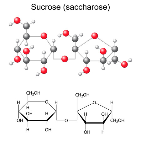 Structural chemical formula and model of sucrose - saccharose, 2D and 3D illustration, vector, isolated, ball and stick style  Ilustração