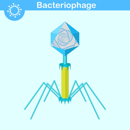 polyhedral: Bacteriophage - bacterial dna virus with opened capsid and dna spiral, 3d vector