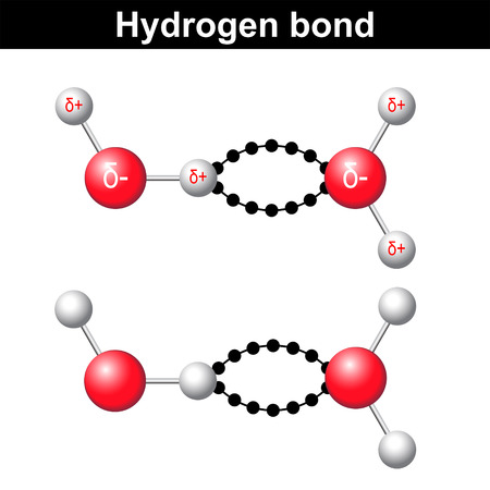 Hydrogen bond chemical illustration,  ionic interaction, 3d water model, vector isolated on white background