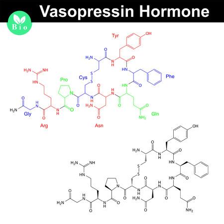 hormone: Vasopressin hormone molecule with marked amino acid components, 2d vector model  Illustration