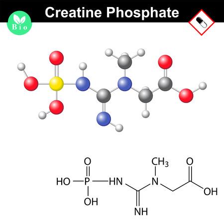 phosphate: Phosphocreatine molecule, creatine phosphate structure, 2d & 3d vector