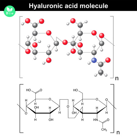 skin structure: Hyaluronic acid molecule, model and molecular structure, 2d & 3d vector, eps 8