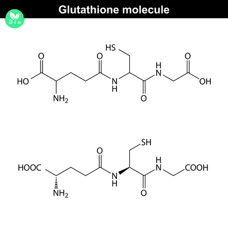 antioxidant: Glutathione chemical structure - antioxidant and regulator and indicator of cell oxidative stress, 2d vector, eps 8