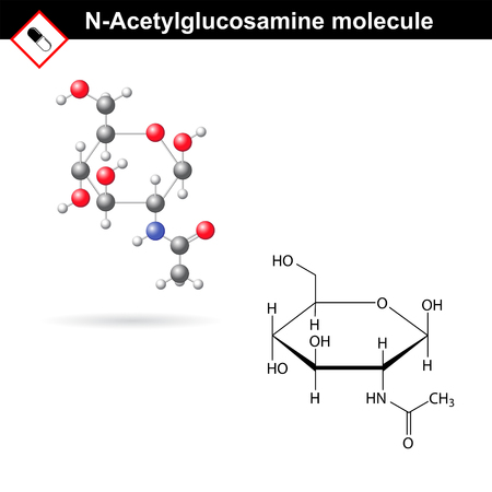 chitin: N-Acetylglucosamine NAG molecule and model - component of hyaluronic acid and chitin, structural chemical formulas, 2d vector, isolated on white background, eps 8 Illustration