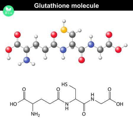 Glutathione chemical molecule - antioxidant and regulator and indicator of cell oxidative stress, 2d and 3d vector models, eps 8