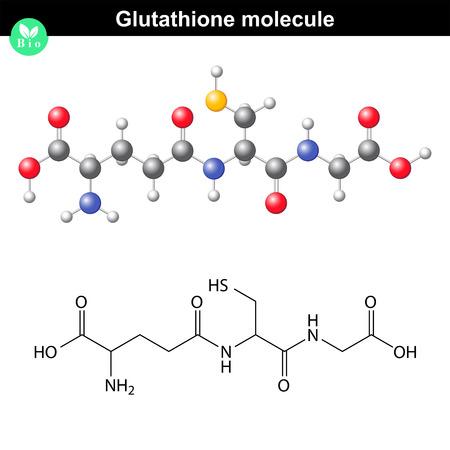 Molécule glutathion chimique - antioxydant et régulateur et indicateur de stress oxydatif cellulaire, 2d et modèles vectoriels 3d, eps 8 Banque d'images - 47554251