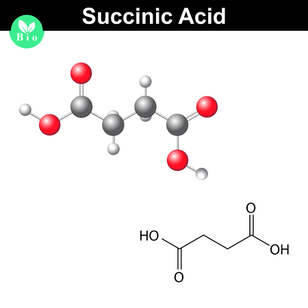 structural: Succinic acid molecule, succinate, structural chemical formula and model, 2d & 3d vector, isolated on white background, eps 8
