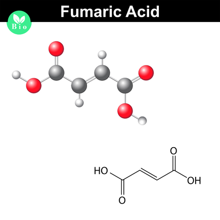 Fumaric acid molecule, fumarate, structural chemical formula and model, 2d & 3d vector, isolated on white background, eps 8 Illustration