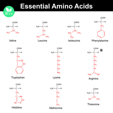 Main essential amino acids with marked radicals, chemical structural formulas