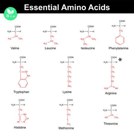 Les acides aminés essentiels avec des radicaux marqués, formules chimiques