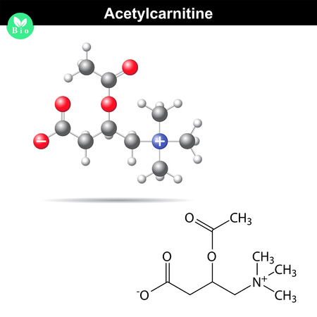 Acetylcarnitine biological molecule, 2d and 3d vector model.