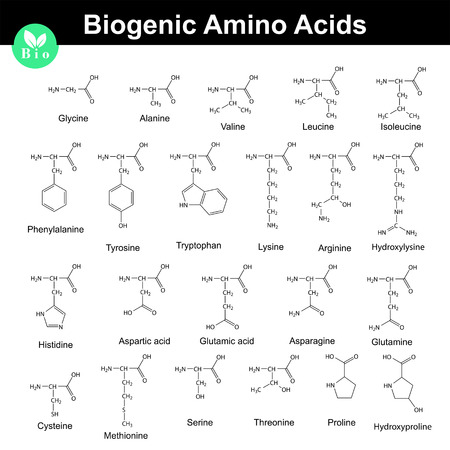 proline: Biogenic amino acids, structural molecular formulas, 2d chemical vector on white background.