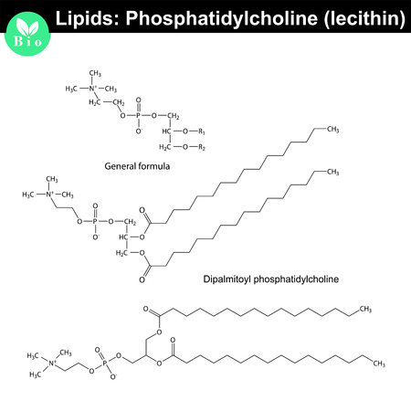 lipids: Lecithin molecular structure, chemical formulas of lipids, phosphatidylcholine molecule isolated on white background, 2d vector, Illustration