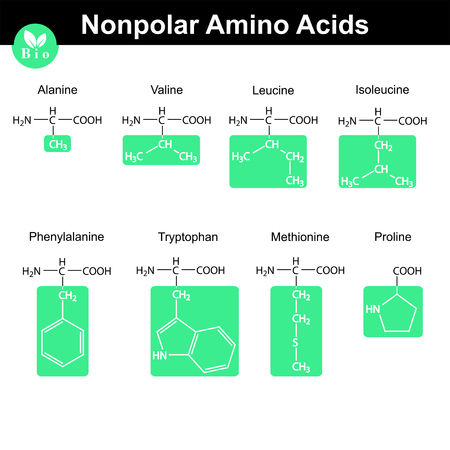 proline: Set of nonpolar amino acids with marked radicals - alanine, valine, leucine, isoleucine, phenylalanine, tryptophan, methionine, proline, molecular structures