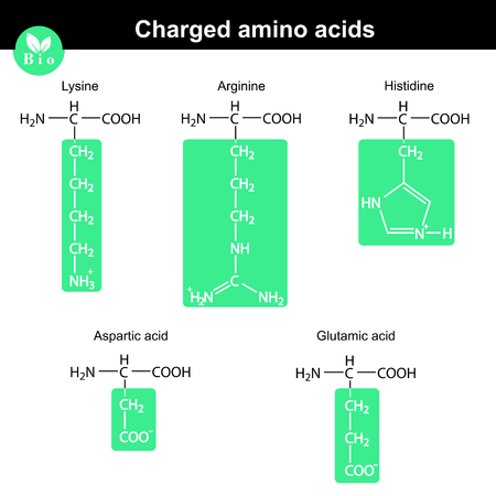 lysine: Set of charged amino acids with marked radicals - lysine, arginine, histidine, aspartic acid, glutamic acid, molecular structures Illustration