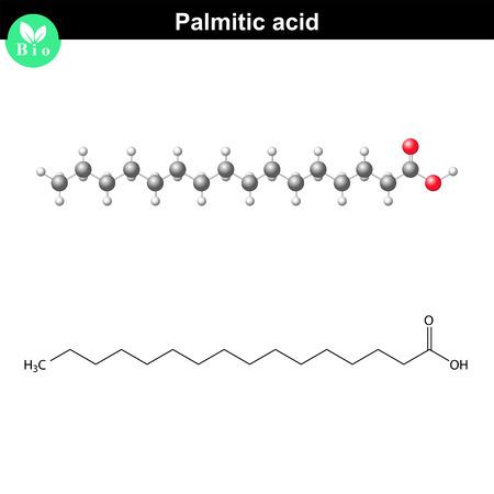 Palmitic acid molecule, molecular structure, 2d and 3d illustration, vector