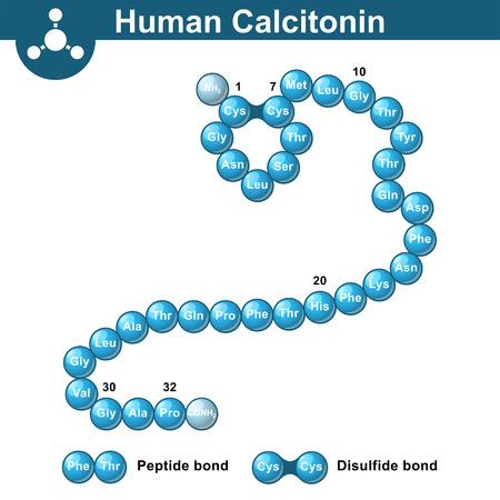 Calcitonine structure peptidique d'hormone, molécule thyrocalcitonin humaine, 3d illustration, vecteur isolé sur fond blanc
