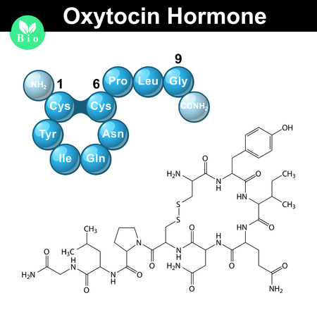 oxytocin: Oxytocin peptide hormone chemical formula and model, 2d and 3d illustration, vector isolated on white background