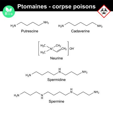 Ptomaines structures - putrescine, cadaverine, nuerine, spermidine and spermine, 2d vector illustration, isolated on white background Иллюстрация