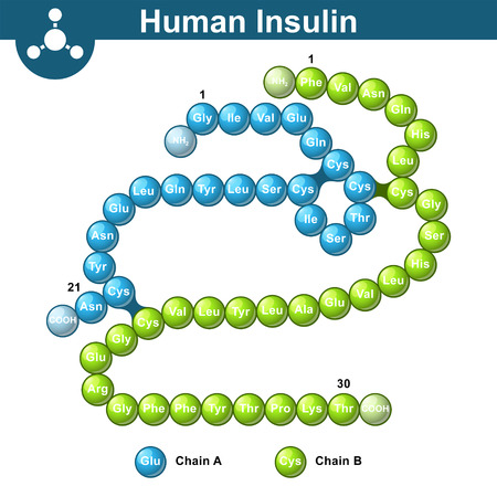 Human insulin hormone molecule, two peptide chains, 3d illustration of  protein, vector isolated on white background Illustration